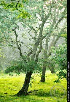 Plants, Painting, Beautiful, Art, Art Background, Painting Art, Kunst, Paintings, Plant