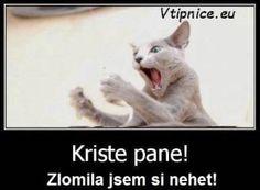 Vtipné a srandovní obrázky s textem na Facebook Google - kočka si zlomila nehet