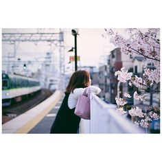 """昨日の面接からの帰り  電車の中から見た土居駅の桜が  あまりにも綺麗やったので  明日雨が降る前に、さっそく今日  行ってきた(笑)  土居の桜撮りたいがために270円。  たかっ!(""""▔□▔) 京橋と一緒って…  #ニコン#nikon#一眼レフ#カメラ好き#ニコン部#nikond5300#Japanese#japan#osaka#igersjp#カメラ初心者#camera#d5300#vsco#vscocam#オールドレンズ#indies_gram#Portrait#ポートレート#ポートレート部#桜#cherryblossom#京阪電車#おけいはん#station"""