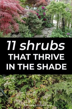 Find out which bushes to plant under trees in the shade garden in your backyard or front yard. These shrubs will help to brighten up your yard. #fromhousetohome #bushes #shade #gardeningtips #gardening #gardenideas Shade Loving Shrubs, Shade Shrubs, Shade Garden Plants, Shade Perennials, Garden Trees, Lawn And Garden, Shaded Garden, Fruit Garden, House Plants