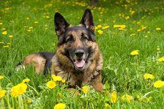 Secrets To Dog Training: Stop your Dog's Behavior Problems - dog training #dogs #dogstraining