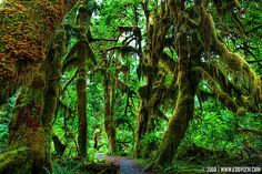 Believe it or not this exists in washington! Hoh rainforest