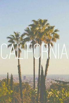 LA & Palm Trees