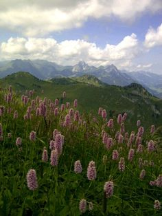 Take a walk from Rinderberg Zweisimmen to Hornberg Schönried and yuo will be facinated by nature and its silence
