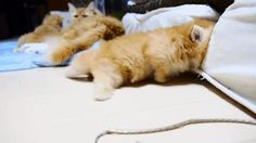 Here's a kitten that forgot how to kitten. | 15 Animals We Just Want To Squeeze
