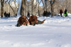 Pups seen in Central Park, NYC!