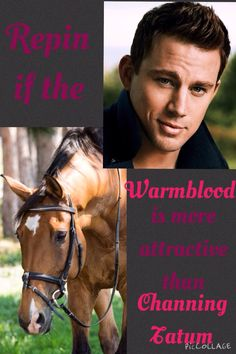 Repin if the Warmblood is more attractive than Channing Tatum. #stylemyride @SMRequestrian http://www.stylemyride.net/