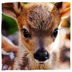 Petit faon trop mignon ☺️✨ rencontré au cours des aventures de #MinaStorm ⚡️ #MinaGirls #faon #fawn #deer #babydeer #bambi #cute #mignon #animauxsauvages #animals #animal #animalsofinstagram #cuteanimals #teen #tween #animallovers #babyanimals #eyes #bambieyes #seventeenmagazine #teenvogue #milkmagazine #forest #forêt #aventure #adventure