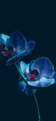 "Photo ""Blue Flower"" by Ledsteplin Photo ""Blue Fl. Photo ""Blue Flower"" by Ledsteplin Photo ""Blue Fl. Orchid Wallpaper, Flower Background Wallpaper, Flower Backgrounds, Mobile Wallpaper, Cool Backgrounds Hd, Dark Blue Wallpaper, Royal Blue Background, White And Blue Flowers, Dark Flowers"