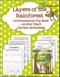 Classroom Compulsion: Rainforest Fun