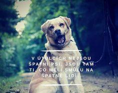 Belgian Malinois, Motto, Labrador Retriever, Best Friends, Jokes, Inspirational Quotes, Humor, Motivation, Psy