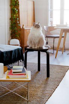 Cat and an Eames LTR #eames #eamestable @vitra #catsandmoderndesign