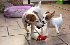 playful mommy and baby jrt