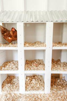 Cute Chicken Coops, Chicken Barn, Diy Chicken Coop Plans, Chicken Life, Chicken Coop Designs, Backyard Chicken Coops, Building A Chicken Coop, Backyard Farming, Raising Backyard Chickens