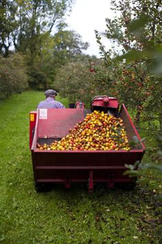 Highbank Orchards, Kilkenny, Ireland   FEAST Dinner Journal - must have apples for that delicious Bulmers Cider!