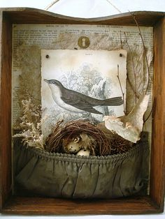 bird nest assemblage in suitcase pocket all put in a drawer