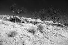 La dune | The dune #02 - Plage des Eloux | Île de Noirmoutier | Vendée | France | December 2013 - #beach #island #mer #noirmoutier #plage #sable #sand #hiver #winter #vendée #île #arbre #bois #dune #nature #tree #wood #éloux #sea