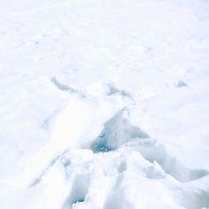 #冬の標本I by 6151