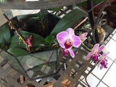 orchid lessons ~