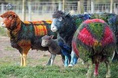 Sheep pre-yarn bomb