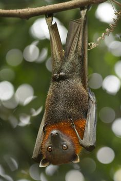 You guys looks funny upside down by Lars Clausen, via 500px