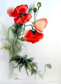 Red watercolor poppies