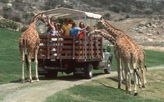 The San Diego Zoo Safari Park has been one of the most popular San Diego Attractions for San Diego visitors to attend for many years. This unique animal-viewing experience near San Diego Hotels like The Declan Suites allows you to see wildlife in a much more natural environment that at traditional zoos, and seeks to provide tourists with fun and education and the same time.