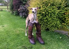 I think I might need the new slim fit Galway boots. These are a little loos around the top. #DogsLoveDubarry