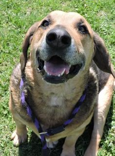 7 / 30 - Petango.com – Meet Billy, a Hound / Mix available for adoption in ANDERSON, IN Address  613 Dewey Street, ANDERSON, IN, 46016  Phone  (765) 356-0900  Website  http://www.petango.com/shelter s/1058  Email  kwilson1236@gmail.com.com