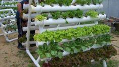 Horta caseira em canos de PVC - Como fazer
