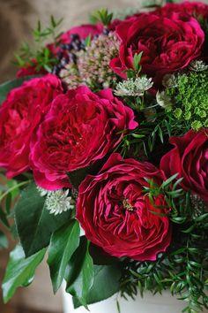 David Austin Darcey roses