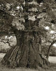 ##Beth Moon - Croft Castle Chestnut##