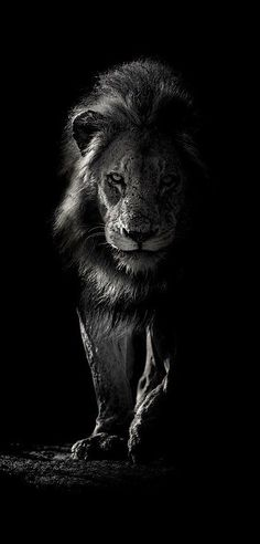 Dark Auburn Hair, Inner Forearm, Apple Wallpaper Iphone, Ganpati Bappa, Curvy Girl Fashion, Tigers, Lions, Creatures, Walls