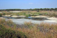 PARC: Parcnational de Doñana Le parc nationalde Doñana...