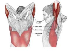 """Double Stimulation Method Workout - Shock Muscles For Growth Have you heard these statements before? """"Hit a muscle hard, then let it recover, train it again days later."""" """"After training a muscle, don't hit it directly or indirectly for at least 3 days. Shoulder Stretching Exercises, Yoga Fitness, Health Fitness, Muscle Stretches, Frozen Shoulder, Muscle Anatomy, Shoulder Workout, Massage Therapy, Physical Therapy"""