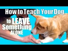 How to Teach ANY Dog to Leave something alone. Yeah, buddy, no more chewing through power cords.