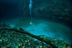 underwater river in Cenote Angelita, Tulum, Mexico (Yucatan Peninsula) formed by a high hydrogen sulfate concentration in the salt water that causes it to sink Under The Water, Under The Ocean, Isla Vaadhoo, Underwater Images, Lago Baikal, Snorkel, Bottom Of The Ocean, Planets, Diving