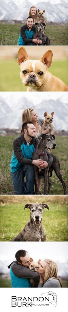 Engagement session in Layton Utah with dogs. French #bulldog and #greatdane. @Lindsey Spilker