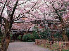 一日3組限定の旅館「井雪」 建具の美しさ、細部のしつらいに日本の宿の心地よさが凝縮