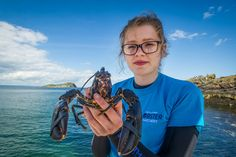 Volunteer with Lobster ready to be V notched and released. Image copyright Edinburgh Evening news