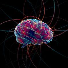 """La red de """"autopistas"""" nerviosas o conectoma del cerebro sirve como """"huella dactilar"""" para identificar individuos, según un estudio de Nature Neuroscience."""