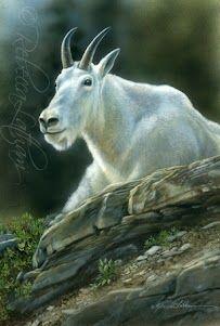 Rocky Edge - Mountain Goat, watercolor on board, 5in x 7in, ©Rebecca Latham #art…