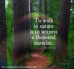 Trendy walk in nature quotes thoughts All Nature, Walking In Nature, Trees Quotes Nature, Beauty In Nature Quotes, Quotes About Nature, Nature Sayings, Mother Nature Quotes, Nature Tree, Quotes About The Woods