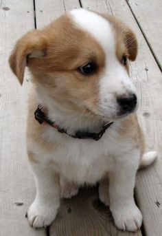 Mixed breed puppy - going to be a great dog!