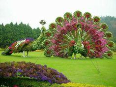 Boxwood Topiary idea garden figures Peacock