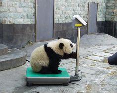 Panda: I am Slim :) :) #Panda