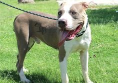 SNOOZE (08262015M-D01) located in Delano, CA has TODAY Left to Live. Adopt him now!