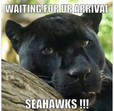 Panthers Panthers Memes, Life Quotes, Life Sayings, Carolina Panthers, Seahawks, Football, Sports, Collage, Animals