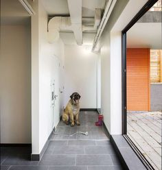 To save interior space place the dog wash station in the garage 5 benefits of having a dog wash station in your home solutioingenieria Image collections