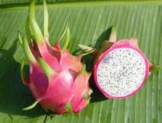 Pitaya or Dragon Fruit – Pitaya is believed to have come from South America, and features beautiful flowers. The fruit is usually a bright red color, but some species are a light pink. The skin of the dragon fruit is a rind, and is usually covered with scales ( hence the name dragon fruit). The center of the fruit consists of a white or red sweet-tasting pulp. Dragon fruit is used in many desserts, making jam, and as an additive for cocktails.